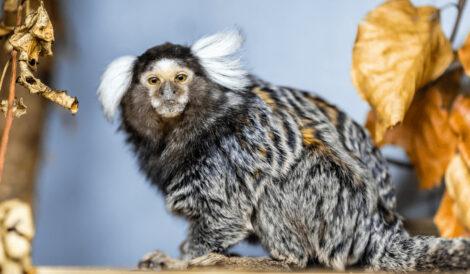 Besøg Hjortdal dyrefarm når du er på ferie i Slettestrand i Nordjylland