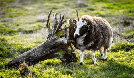 Hjortdal dyrefarm i Hjortdal i Nordjylland